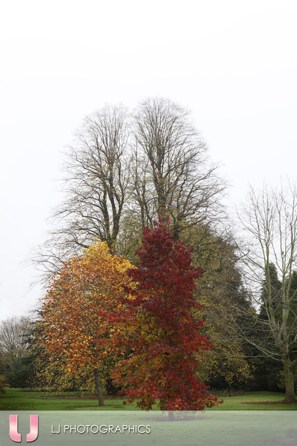 Autumn Colours at Shinfield Grange